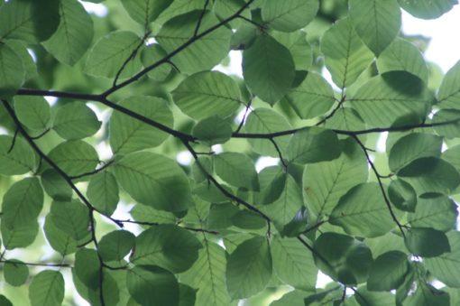 green leaves symbolising sustainability and esg data